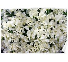 White Sweet Pea Design for T-shirt or other Products Poster