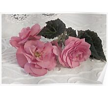 Pink Begonias And Their Leaves Poster