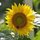 Sunshine for You  by barnsis