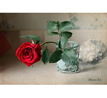 A Rose ~ In the Light of Early Morn Photographic Print