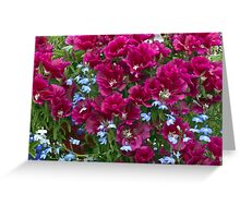 Pink Godetia And Blue Lobelia Greeting Card