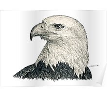 American Bald Eagle - black & white ink graphics Poster