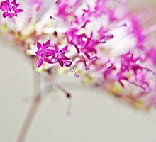 Magenta Cheer by photojeanic