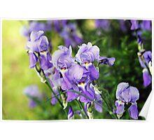 Garden Scene-900756 Poster