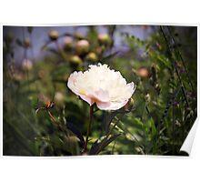 Garden Scene-800567 Poster