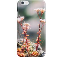 Little Red Flowers iPhone Case/Skin