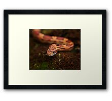 Red Corn snake, Animal Photography, Red, Reptile Framed Print