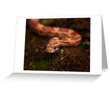 Red Corn snake, Animal Photography, Red, Reptile Greeting Card