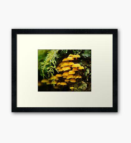 Orange mushrooms, Macro photography, Nature, Fine art Framed Print
