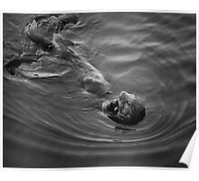 Sea Otter III BW Poster