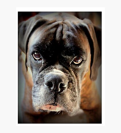 Boxer Series Photographic Print
