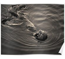 Sea Otter III Toned Poster