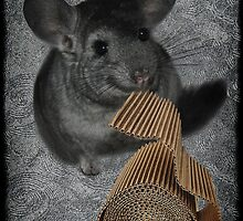 CHINCHILLA (LITTLE CHINCA) NIBBLING CARBOARD AND LOVIN IT PICTURE/CARD by ✿✿ Bonita ✿✿ ђєℓℓσ