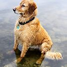 Wet Dog ~ Cooling Off At the Lake by SummerJade