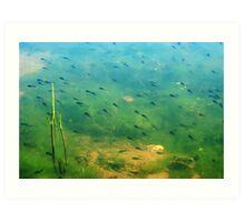 A ditch full of tadpoles Art Print