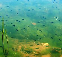 A ditch full of tadpoles by steppeland