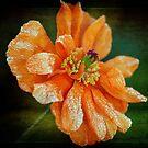 Orange by Clare Colins