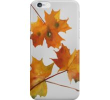 Falling leaves of autumn I iPhone Case/Skin