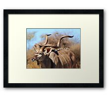 Kudu Bull - African Wildlife Background - Spiral Pride Framed Print