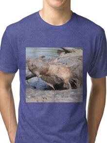 Warthog - African Wildlife Background - Healing Mud Bath Tri-blend T-Shirt