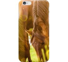 Two horses grazing at sunset iPhone Case/Skin