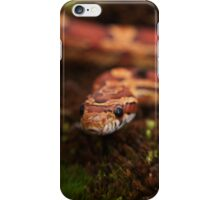 Red Corn snake, Animal Photography, Red, Reptile iPhone Case/Skin
