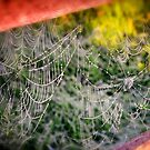 Cobwebs and Dew Drops by KellyHeaton