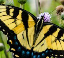 Eastern Tiger Swallowtail Butterfly Sticker