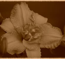 Just Peachy (in Sepia) by Expressions &  Reflections by Shellie Hill