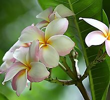 Hawaiian Flowers by northbeach