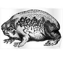 Hippo Toad  Poster