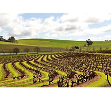 Barossa Valley in Winter Photographic Print