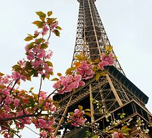 Blooming Beauties In Paris by Michael Matthews