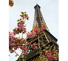 Blooming Beauties In Paris Photographic Print