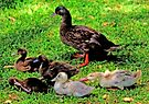 The Duck's Family Portrait by Evita