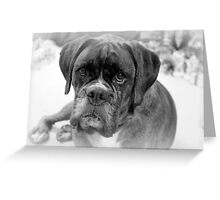 Contemplating My New Years Resolution ~ Boxer Dogs Series Greeting Card