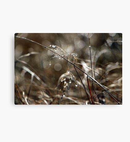 Pure Morning IV Canvas Print