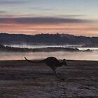 Kangaroo  by Daniel Rankmore
