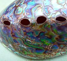 Abalone by globeboater