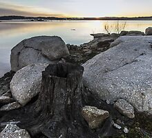 Stumped at Copeton by Daniel Rankmore