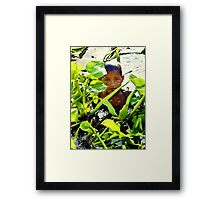 Boy Swimming in Cambodia Framed Print