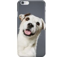 Jack Russell terrier male iPhone Case/Skin