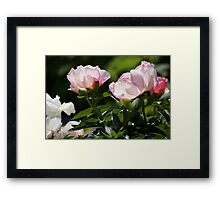 PINK AND WHITE FLOWERS WITH GREENERY Framed Print
