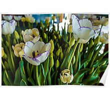 EARLY SPRING TULIPS Poster