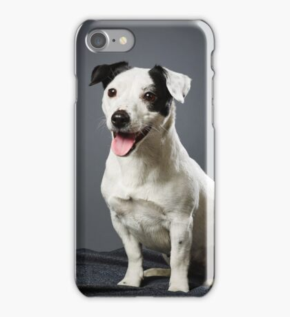 Jack Russell terrier female iPhone Case/Skin