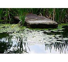 Rock In The Pond Photographic Print