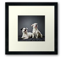 Jack Russell terrier puppy and female Framed Print