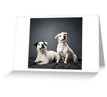 Jack Russell terrier puppy and female Greeting Card