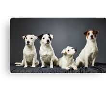 Jack Russell terrier family portrait Canvas Print