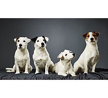 Jack Russell terrier family portrait Photographic Print